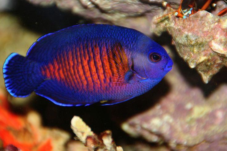 Saltwater fish mike Meier