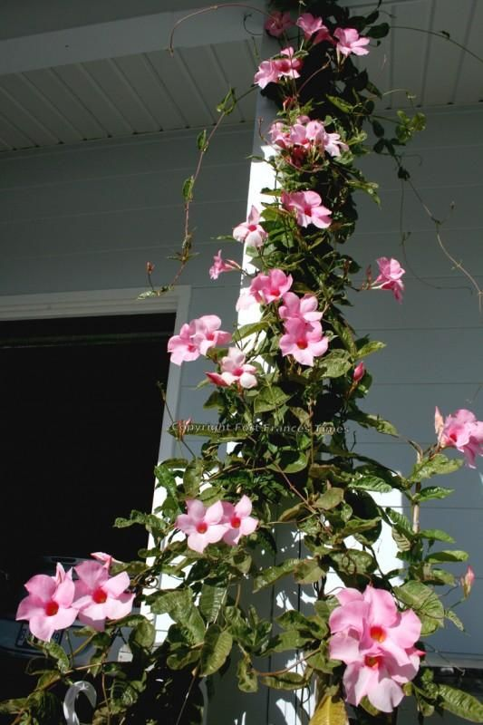 The tropics are rampant with vines, and your garden should ...