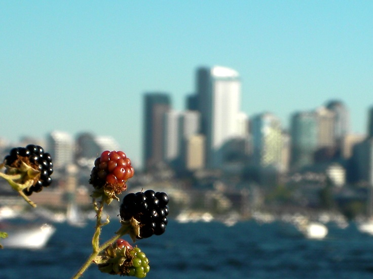 Blackberries and the skyline in Seattle, Washington, Usa
