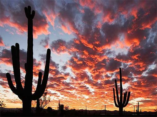 Tucson - Arizona has the most amazing sunsets on a nightly basis