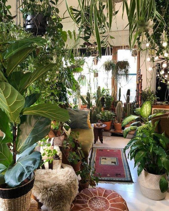 38 + Einfache Zimmerpflanzen für Indoor House Ideas