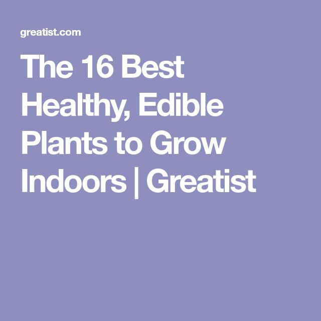 The 16 Best Healthy Edible Plants To Grow Indoors 400 x 300