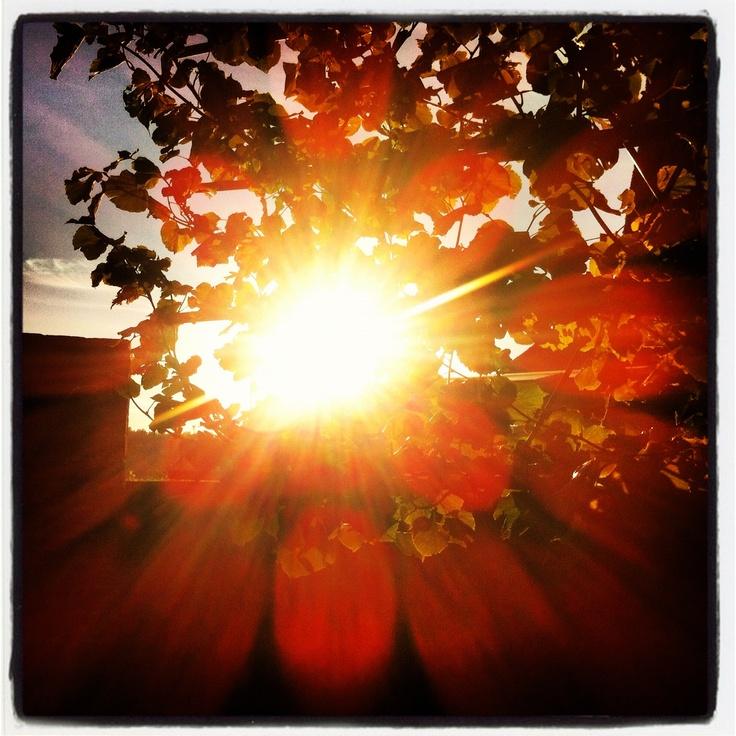 lomo sun