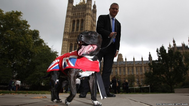 Andrew Rosindell MP walks his Staffordshire Bull Terrier Buster during the Westminster Dog of the Year competition outside the Houses of Parliment in London.