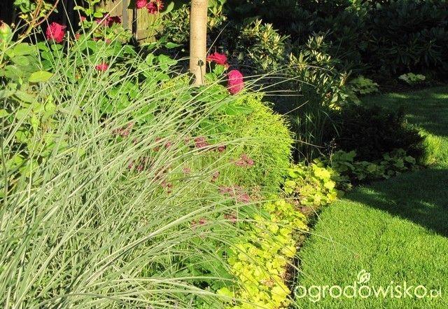 Pokażę nasz ogród - strona 286 - Forum ogrodnicze - Ogrodowisko