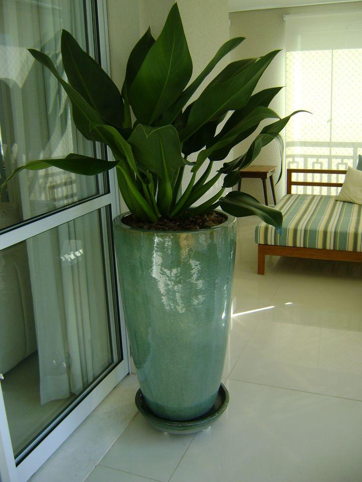 Mejores plantas de interior plantas internas grandes - Plantas interior grandes ...
