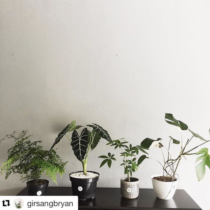 Thanks for the lovely photo and for taking care of the baby plants @girsangbryan !!  Photoshoot today with @styleanddecormagz . . #Repost @girsangbryan  fresh air