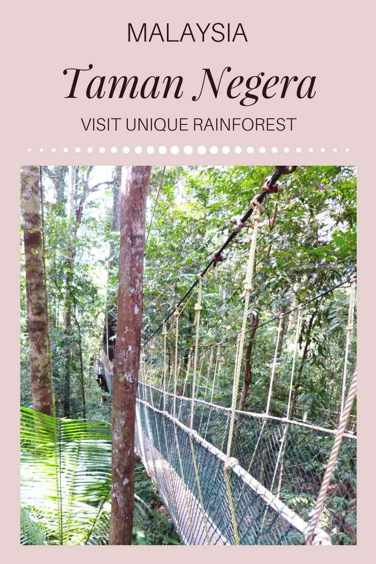 Visit one of the oldest tropical rainforests of Taman Negara, which is located in Malaysia is a true experience of a lifetime.