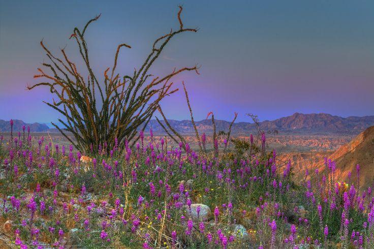 Deserto di Anza Borrego, Stati Uniti