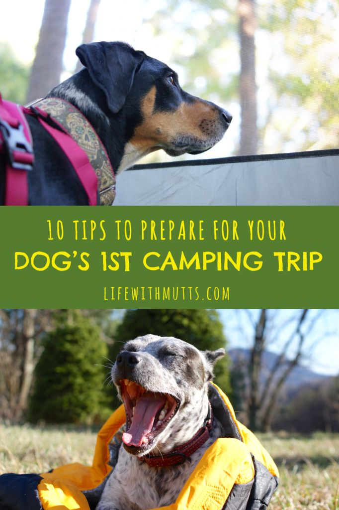 10 Tips to Prepare for Your Dog's First Camping Trip
