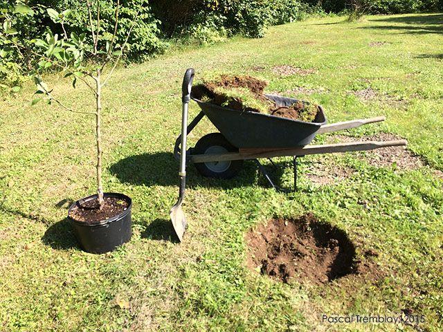Les 25 meilleures id es de la cat gorie pommier sur pinterest plantation pommier taille du - Bouillie bordelaise sur arbres fruitiers en fleurs ...