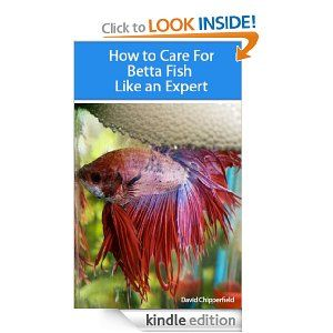 17 best images about how to take care of a betta fish on for How to care for a betta fish