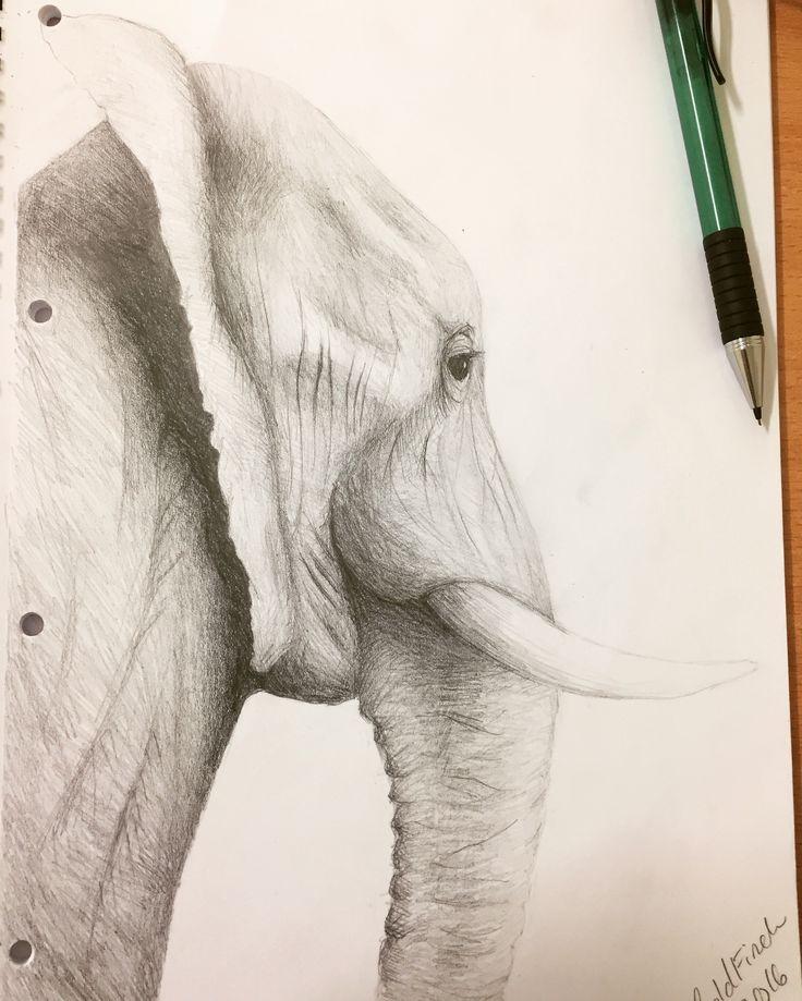 Instagram @goldfincheve4  Art artwork drawing pencil animal elephant
