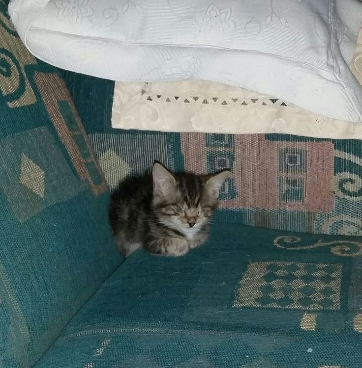 One blind kitten = One very bossy and demanding little furgirl ... Lucky she is very cute lol
