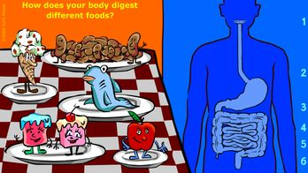 check out this awesome interactive website for the digestive system