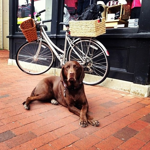 Annapolis Is A Dog Town From Annapolisgirl Tumblr Com Dogs Annapolis Animals