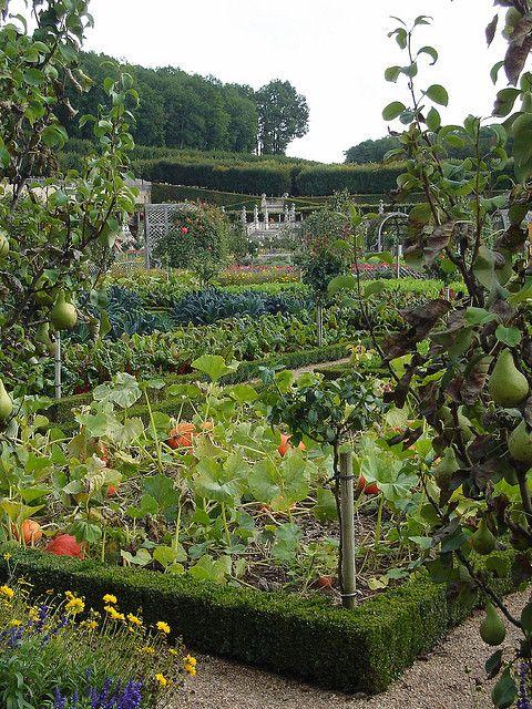 boxwood edged vegetable garden . the kitchen garden . by kentish via flickr