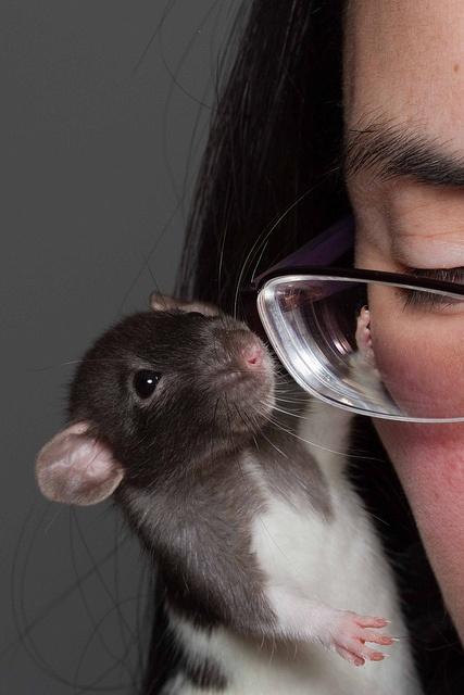 -- little rat