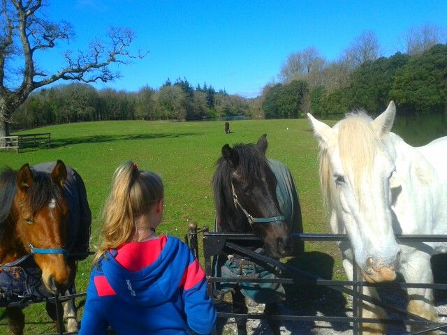 Horse heaven.  Castlemartyr resort. Co. Cork