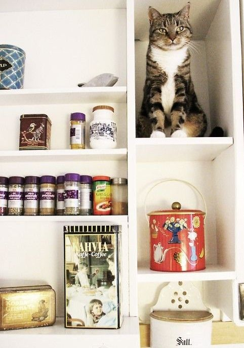 We create made-to-measure shelving for kitchens, bedrooms, studies etc - but you must provide your own cat! www.countrykitchensdevon.com 01363 877348 ckitchensdevon@gmail.com