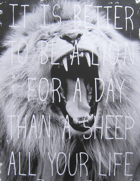 Be a Lion 4 a day