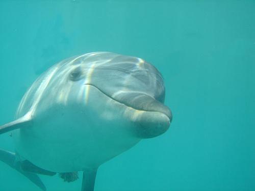 25 najlepších nápadov na Pintereste na tému Marine Biology Degree - marine biologist job description