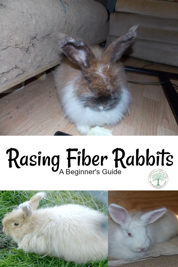 What is cute, fluffy, and will give you wool to knit or crochet with? Fiber rabbits. Everything you ever wanted to know about fiber rabbits is here! The Homesteading Hippy via @homesteadhippy