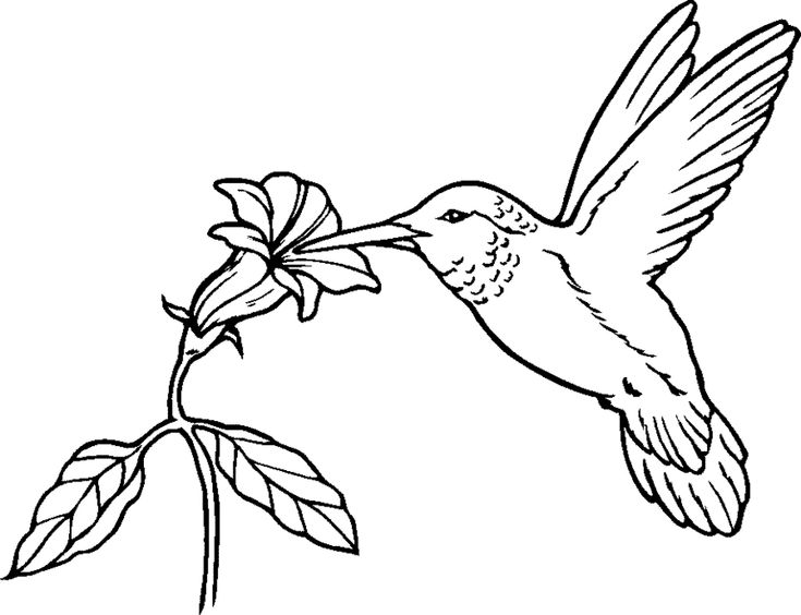 Attractive Free Hummingbird Stencil To Print   Bing Images