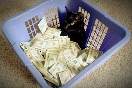 laundry basket cat with money. Hes just chilling in that basket!  catswithmoney.com