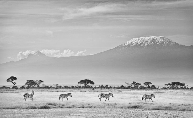 We rounded off the field course with a few days in Amboseli. The haze slowly cleared in our last few hours in the park to reveal the snow capped peak of Kilimanjaro.  Rift valley lakes, Kenya We started the new year with the MSc behavioural ecology field course in Kenya. The water levels