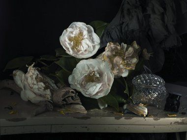 Fiona Pardington, Still Life with My Mother's Camellia and Mokohinau Black, Coral 2011, pigment inks on Hahnemuhle Photo Rag