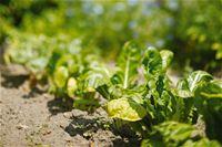 Önellátó kertészkedés - Kertészeti Tippek, Zöldségek, Gyümölcsök, Gyógynövények, Tavasz, Önellátó Kertészkedés