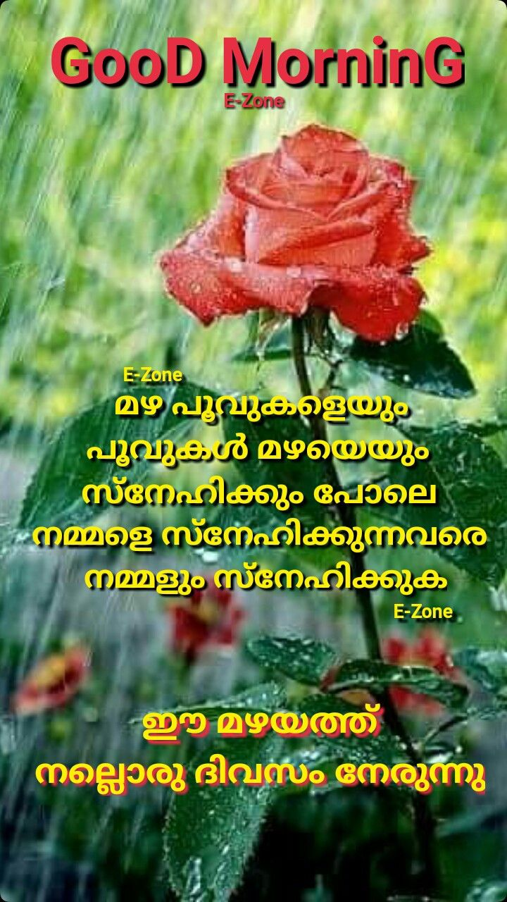 Pin By Eron On Good Morning Malayalam Good Morning Quotes Good Morning Wishes Good Morning Flowers