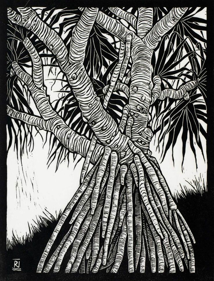 Linocuts by artist Rachel Newling of Australian landscape, trees & water, Boab trees, Pandanus trees, Kakadu pandanus, Sydney Harbour, Golden Bay, Endeavour River, Lake Ainsworth, Tea trees, sea & Angophora trees. Linocuts are for sale as limited edition prints
