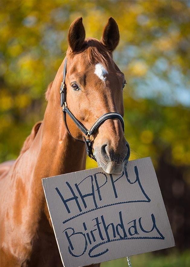 Конкурса открыток, картинки с днем рождения с лошадьми с подписью