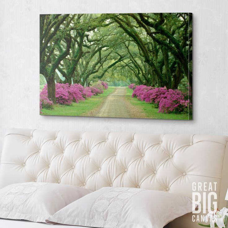 "Nature Photography. Canvas print ""A beautiful pathway lined with trees with purple bushes at their bases"" by Sam Abell. Find at GreatBIGCanvas.com"