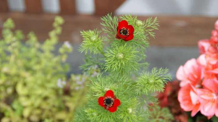 Birgitte på nettet: Krukkeplanter