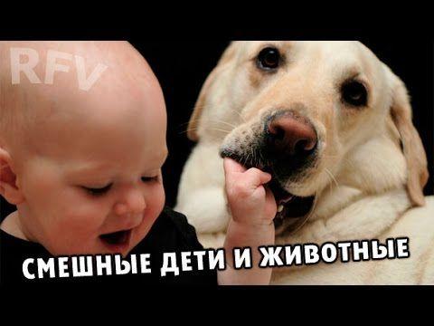 Дети и животные 2 · Приколы с животными 2015 · Cats, Dogs & Cute Babies ...