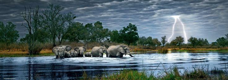 Puzzle 2000 pièces Troupeau d'éléphants, Okavango Delta, Botswana Photo de Alex Bernasconi Réf : 29508 Heye www.puzzlemanie.fr