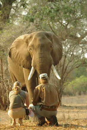 #goliathsafaris #manapools #zimbabwe #safari #africa #camp #tent #off2africa #holiday #elephant #upcloseandpersonal