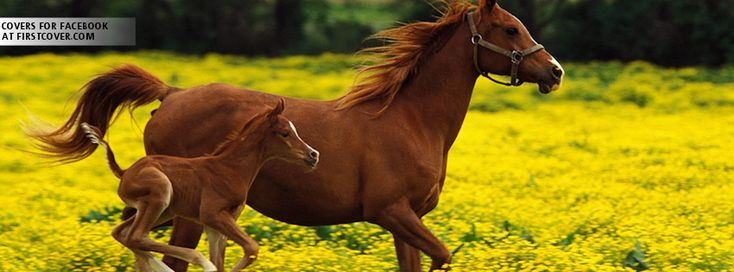 Click here to download in HD Format >>       Horses Cover    http://www.superwallpapers.in/wallpaper/horses-cover-new-6.html