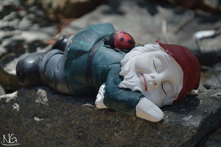 This kitsch gnome I saw lying around