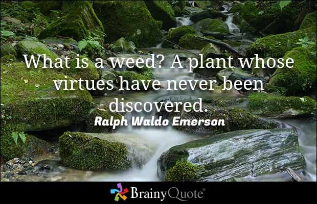 What is a weed? A plant whose virtues have never been discovered ...