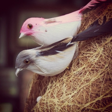 Early Birds: If you like these birds, you can have them. You don't have to keep them in a cage cuz they won't fly away :-) Many attractive handicrafts are available at Ekamra Haat. But these birds caught our fancy <3 #bhubaneswar #odisha #orissa #ekamrahaat