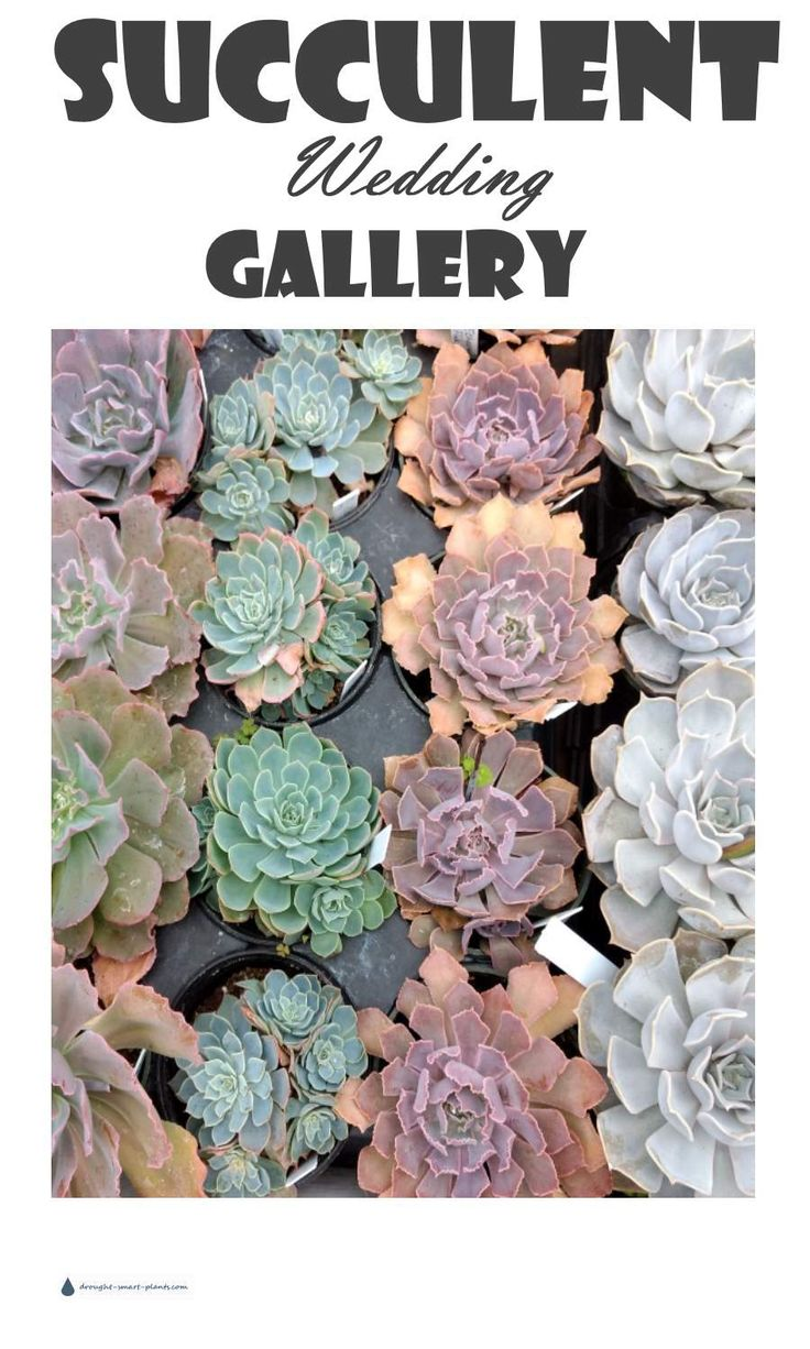 Succulent Wedding Gallery - Celebrate your beautiful day with succulents... Succulent Wedding Ideas