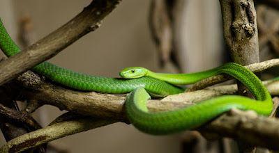 Despre Animale : Reptile - Partea 1