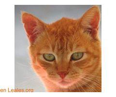 ver foto ℹ  En todos los navegadores: Leales.org y en todas las redes sociales: @lealesorg  #Adopción  Contacto y Info: Pulsar la foto o aquí: https://leales.org/animales-en-adopcion/gatos-en-adopcion/ver-foto_i3695    Acerca de esta publicación:   Esta publicación NO ha sido creada por Leales.org y NO somos responsables de su contenido.  Ha sido publicada gratuitamente por un usuario en la multiplataforma Leales.org y autodifundida por los servidores en Facebook Twitter Instagram Google…