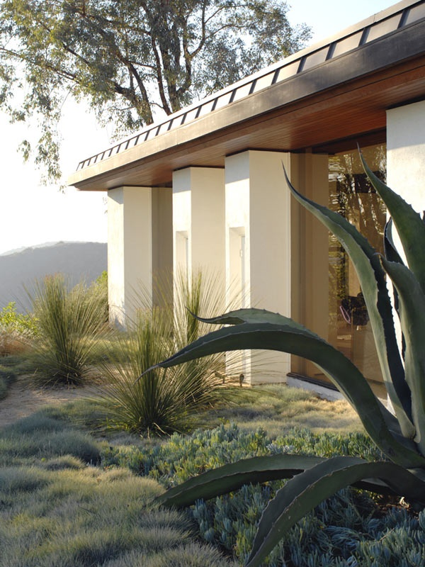 Sculptural Succulents Complement A Classic Modernist Pavilion. Bold Masses  Of Kangaroo Paws And Ornamental Grasses