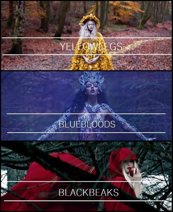 The Yellow Legs, The Bluebloods, and the best of them all, The Blackbeaks! Who doesn't just love Manon?