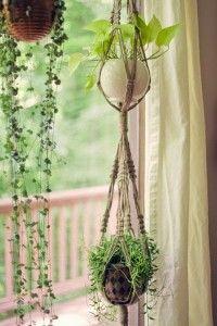 hanging_plants2